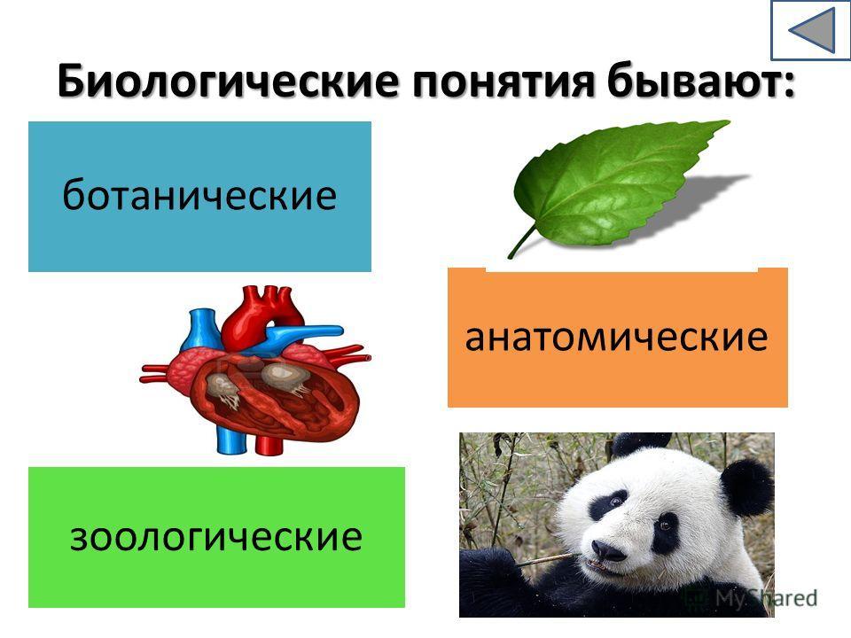 Биологические понятия бывают: ботанические зоологические анатомические