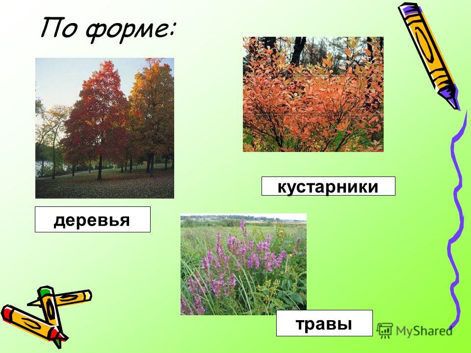 По форме: кустарники деревья травы