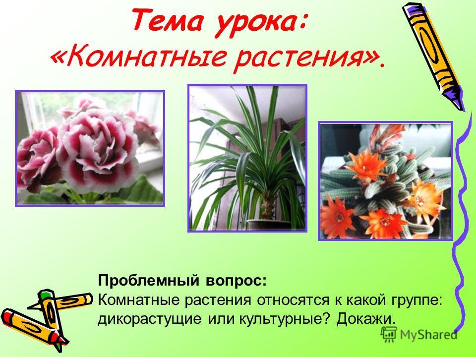 Тема урока: «Комнатные растения». Проблемный вопрос: Комнатные растения относятся к какой группе: дикорастущие или культурные? Докажи.