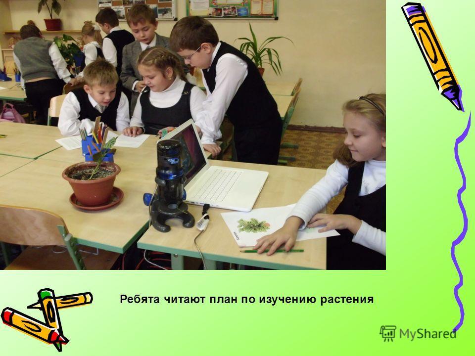 Ребята читают план по изучению растения