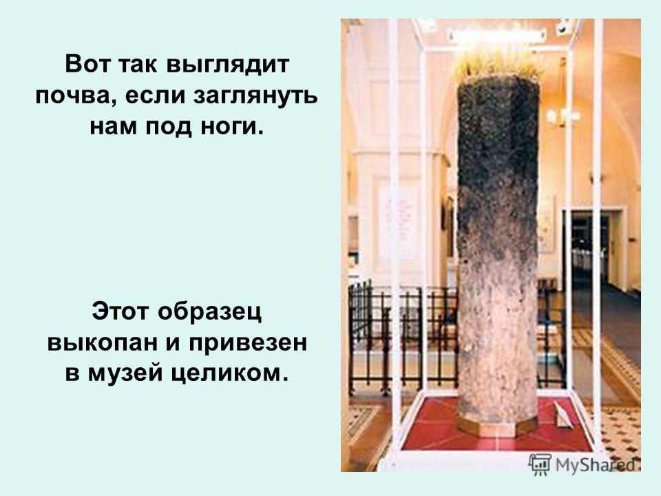 Вот так выглядит почва, если заглянуть нам под ноги. Этот образец выкопан и привезен в музей целиком.