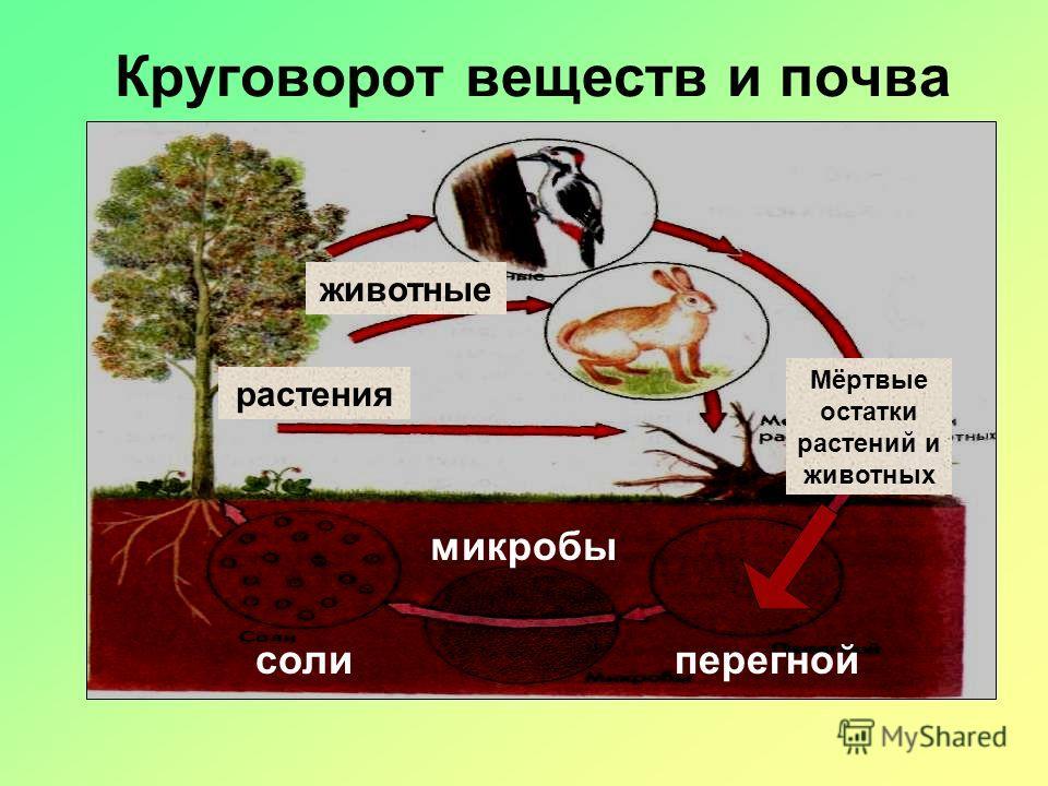 Образование почвы разрушение горных пород появление некоторых неприхотливых растений образование перегноя появление различных животных, повышающих плодородие почвы