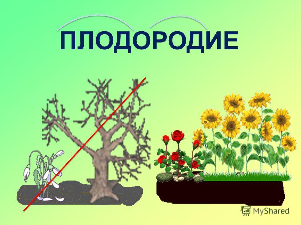 ПЕРЕГНОЙ (ГУМУС)- остатки растений и животных придаёт тёмный цвет почве ЧЕРНОЗЁМ