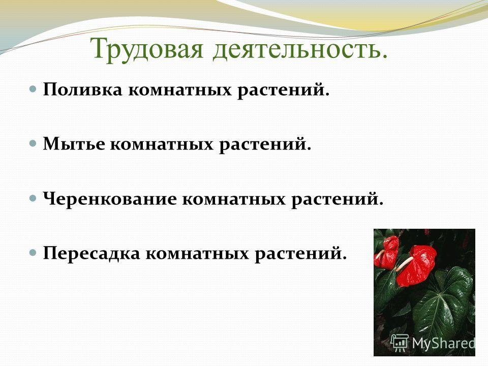 Трудовая деятельность. Поливка комнатных растений. Мытье комнатных растений. Черенкование комнатных растений. Пересадка комнатных растений.