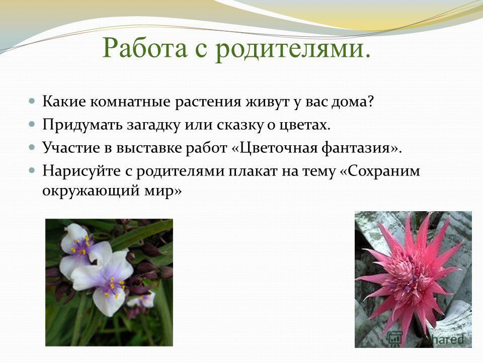 Работа с родителями. Какие комнатные растения живут у вас дома? Придумать загадку или сказку о цветах. Участие в выставке работ «Цветочная фантазия». Нарисуйте с родителями плакат на тему «Сохраним окружающий мир»