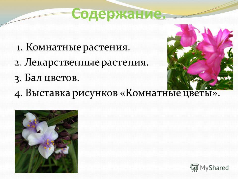 Содержание. 1. Комнатные растения. 2. Лекарственные растения. 3. Бал цветов. 4. Выставка рисунков «Комнатные цветы».