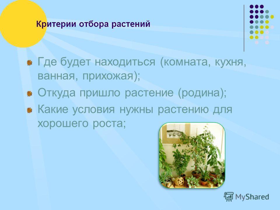 Критерии отбора растений Где будет находиться (комната, кухня, ванная, прихожая); Откуда пришло растение (родина); Какие условия нужны растению для хорошего роста;