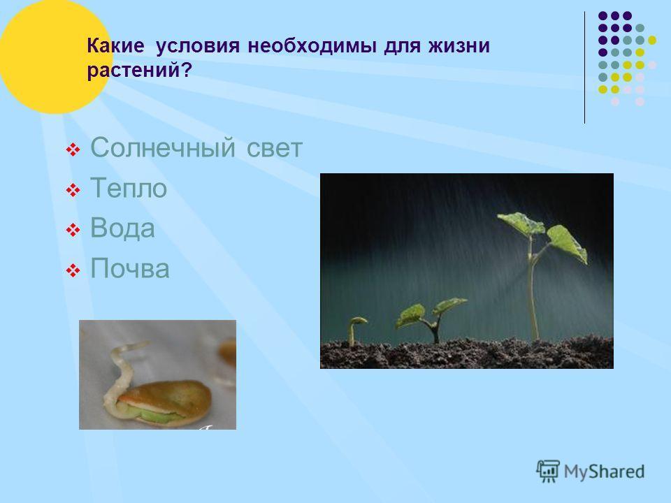 Какие условия необходимы для жизни растений? Солнечный свет Тепло Вода Почва