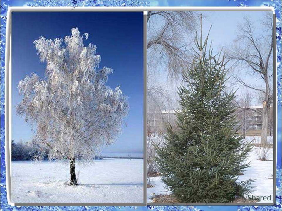 Растения Деревья КустарникиТравы Лиственные Хвойные