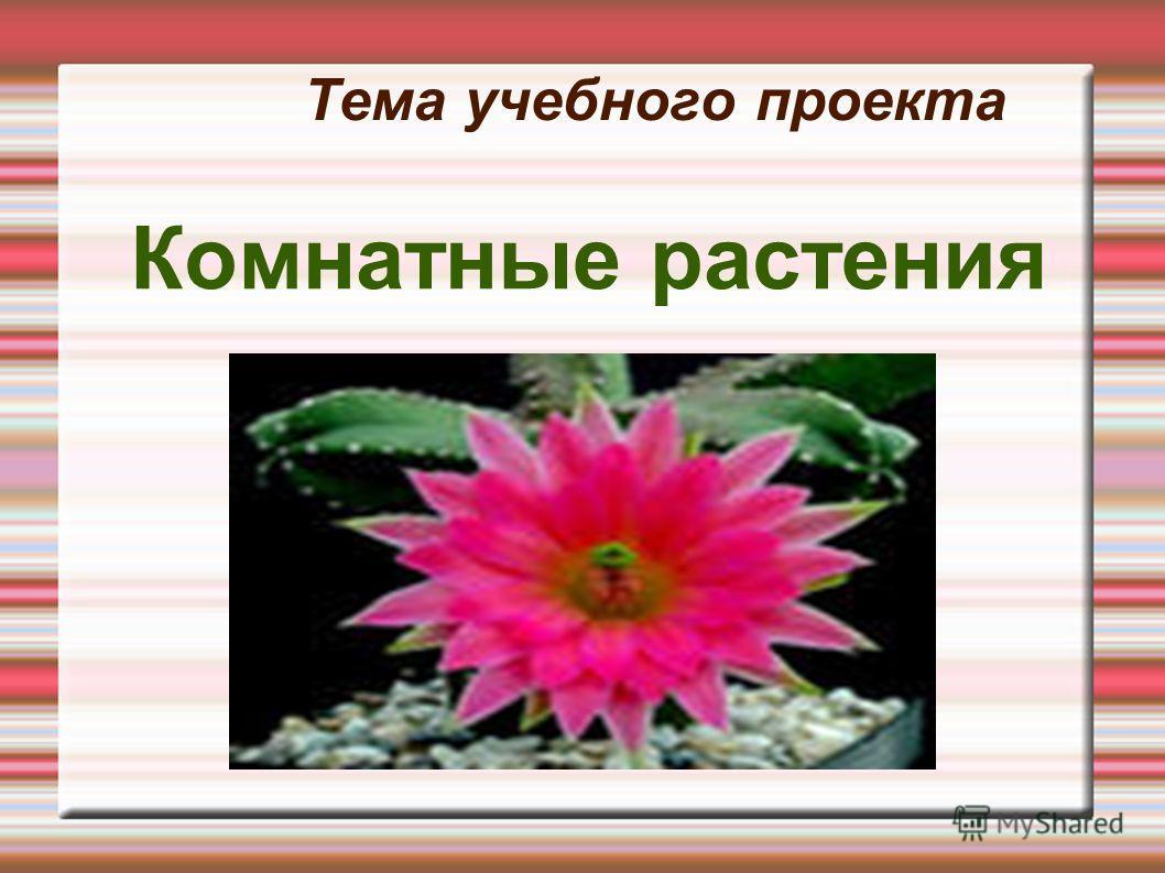 Тема учебного проекта Комнатные растения