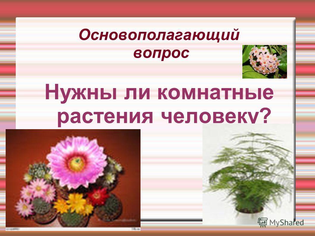 Основополагающий вопрос Нужны ли комнатные растения человеку?