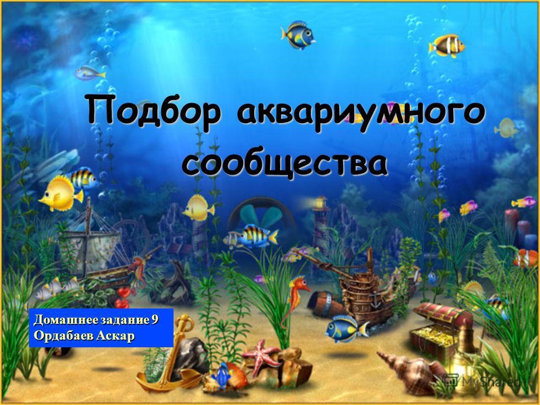 Подбор аквариумного сообщества Домашнее задание 9 Ордабаев Аскар