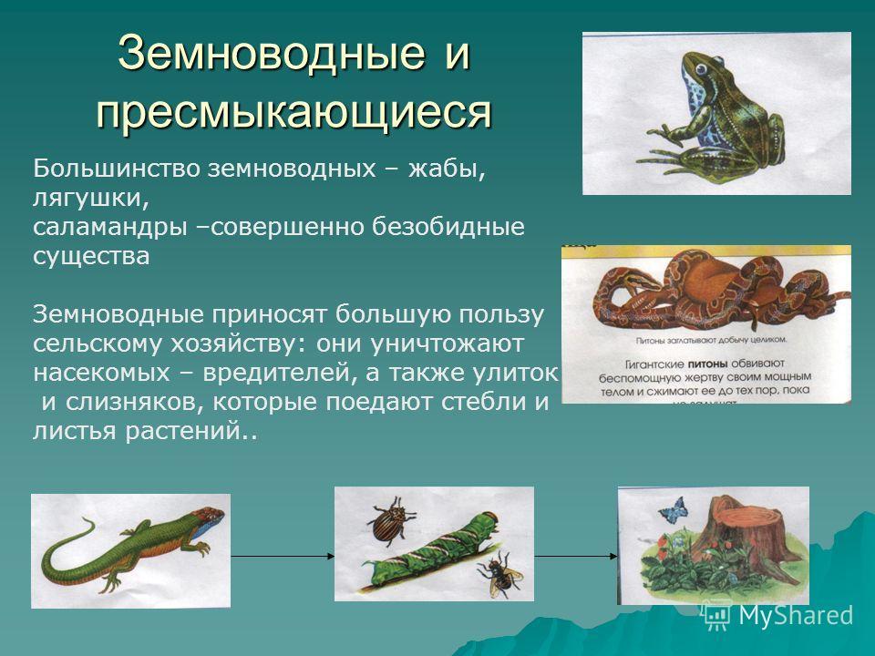 Земноводные и пресмыкающиеся Большинство земноводных – жабы, лягушки, саламандры –совершенно безобидные существа Земноводные приносят большую пользу сельскому хозяйству: они уничтожают насекомых – вредителей, а также улиток и слизняков, которые поеда