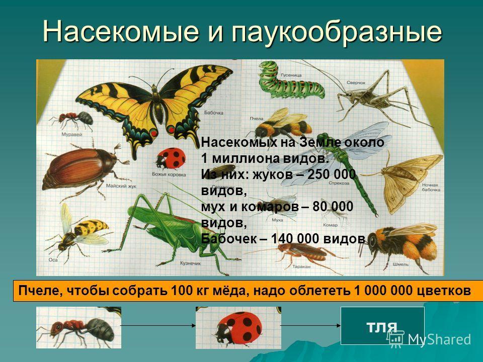 Насекомые и паукообразные Насекомых на Земле около 1 миллиона видов. Из них: жуков – 250 000 видов, мух и комаров – 80 000 видов, Бабочек – 140 000 видов Пчеле, чтобы собрать 100 кг мёда, надо облететь 1 000 000 цветков тля