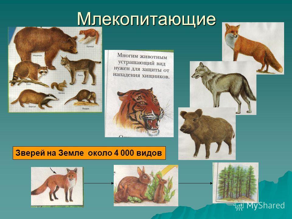 Млекопитающие Зверей на Земле около 4 000 видов