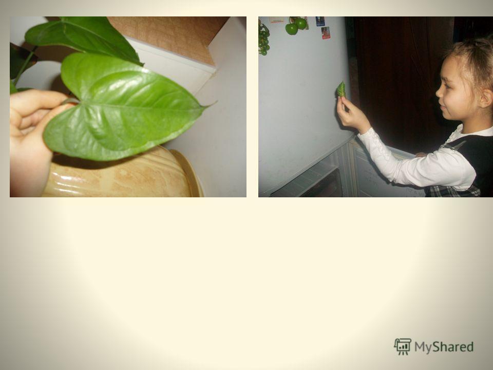 Комнатные цветы Красивоцветущие растения Декоративно-лиственные растения Папоротники Ампельные растения Суккуленты
