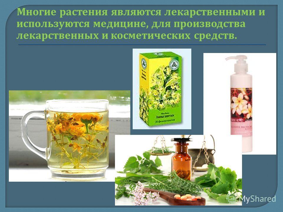 Многие растения являются лекарственными и используются медицине, для производства лекарственных и косметических средств.