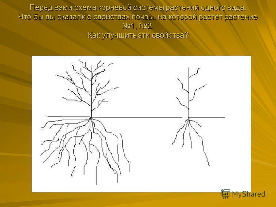 Перед вами схема корневой системы растений одного вида. Что бы вы сказали о свойствах почвы, на которой растёт растение 1, 2. Как улучшить эти свойства? Перед вами схема корневой системы растений одного вида. Что бы вы сказали о свойствах почвы, на к