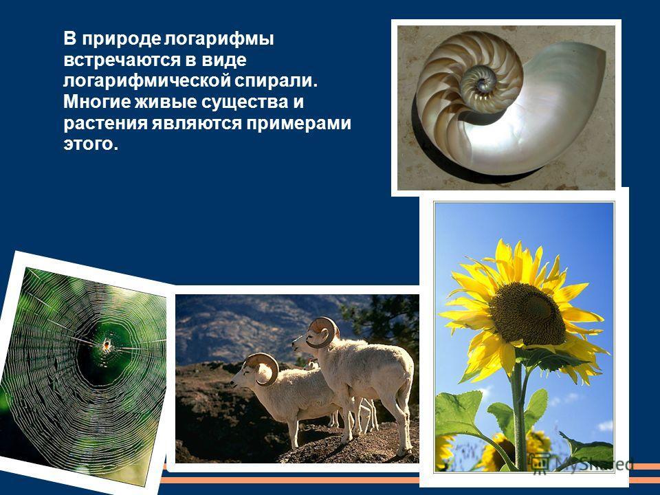 В природе логарифмы встречаются в виде логарифмической спирали. Многие живые существа и растения являются примерами этого.