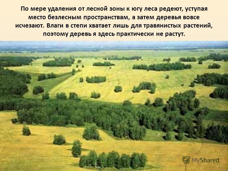 По мере удаления от лесной зоны к югу леса редеют, уступая место безлесным пространствам, а затем деревья вовсе исчезают. Влаги в степи хватает лишь для травянистых растений, поэтому деревья здесь практически не растут.