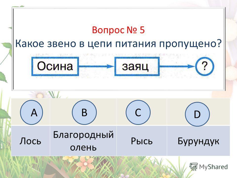 Вопрос 5 Какое звено в цепи питания пропущено? Лось Благородный олень Рысь Бурундук А BC D