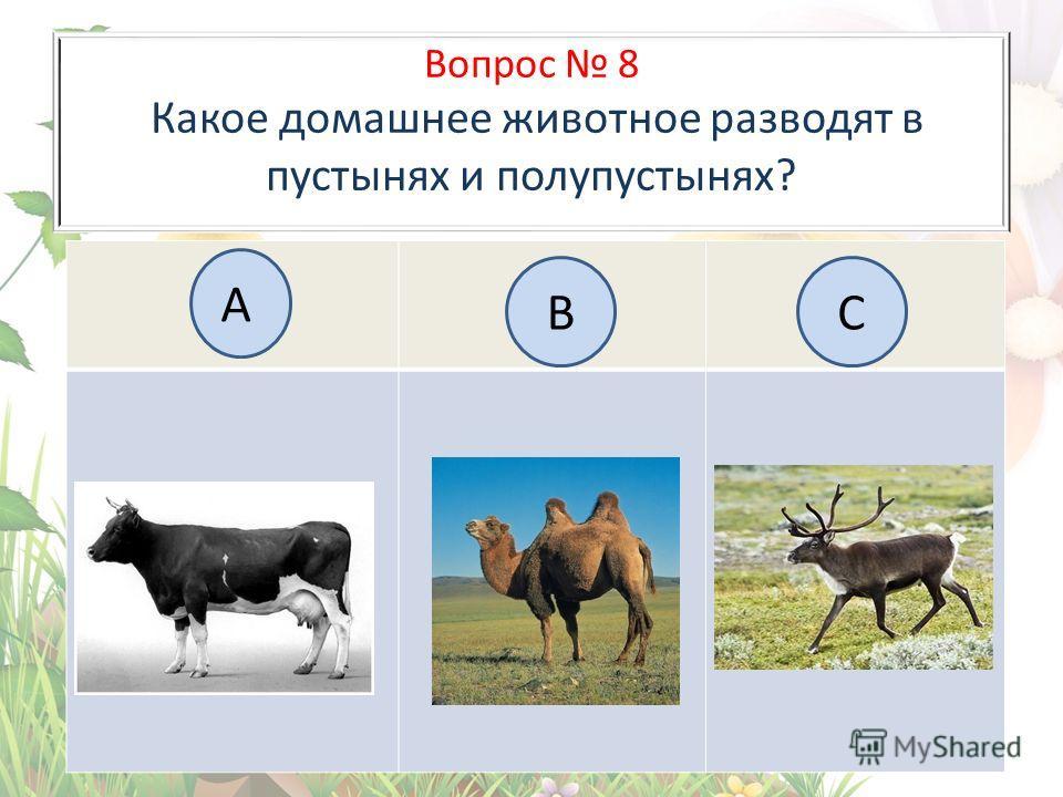 Вопрос 8 Какое домашнее животное разводят в пустынях и полупустынях? А BC