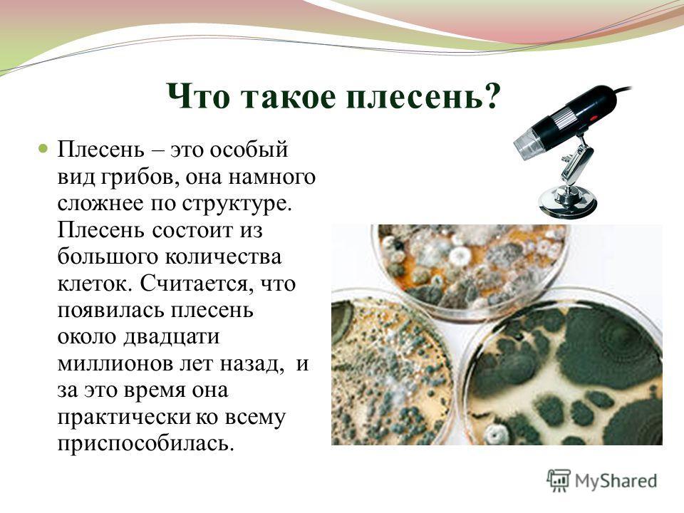 Что такое плесень? Плесень – это особый вид грибов, она намного сложнее по структуре. Плесень состоит из большого количества клеток. Считается, что появилась плесень около двадцати миллионов лет назад, и за это время она практически ко всему приспосо