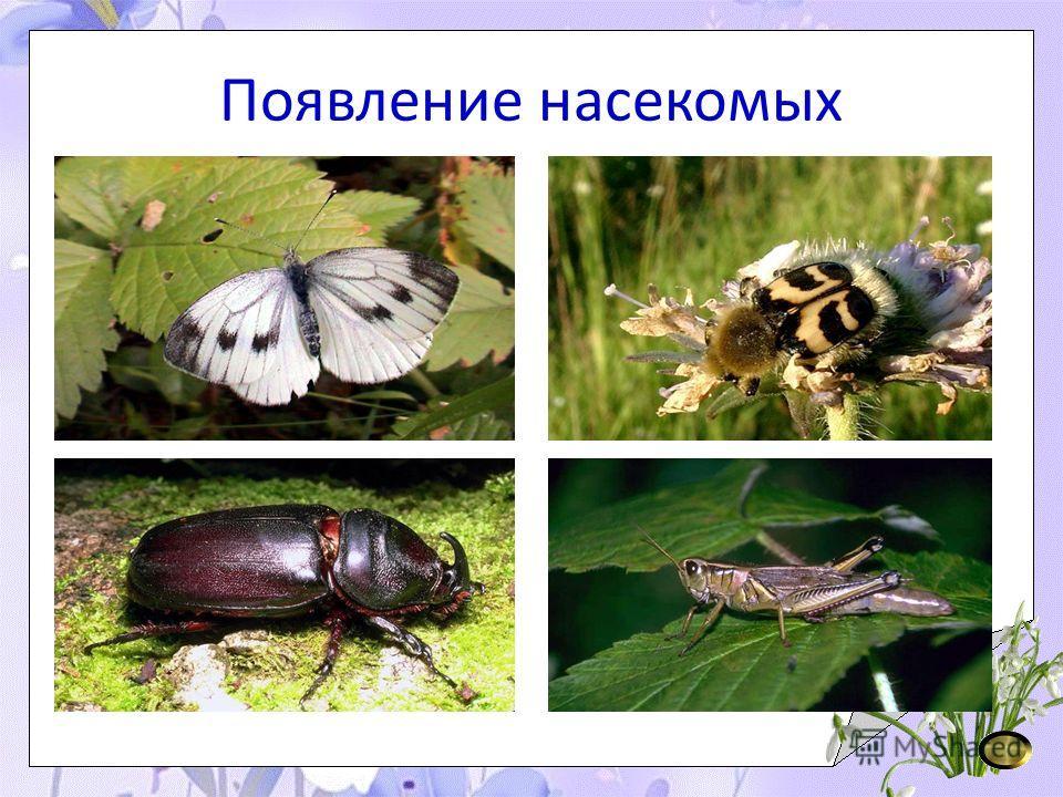 Появление насекомых