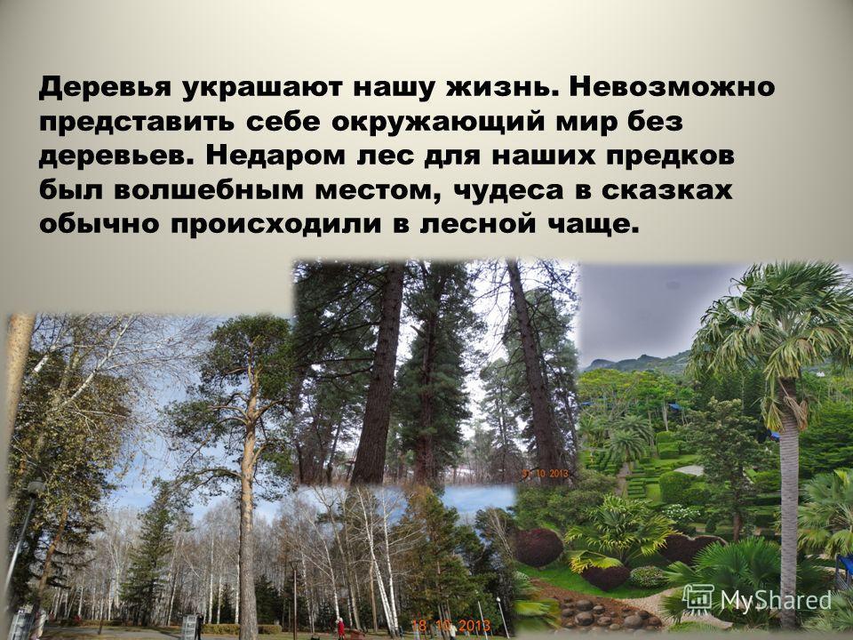 Деревья украшают нашу жизнь. Невозможно представить себе окружающий мир без деревьев. Недаром лес для наших предков был волшебным местом, чудеса в сказках обычно происходили в лесной чаще.