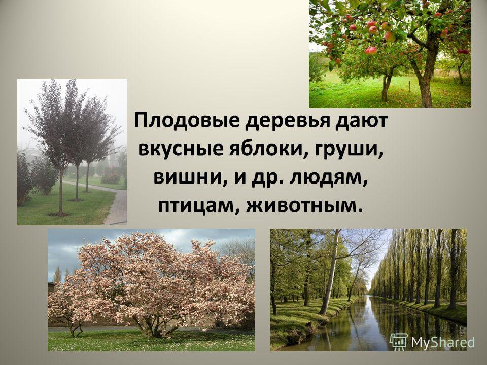 Плодовые деревья дают вкусные яблоки, груши, вишни, и др. людям, птицам, животным.
