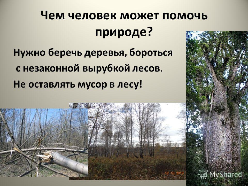 Зачем нужно сажать леса 35