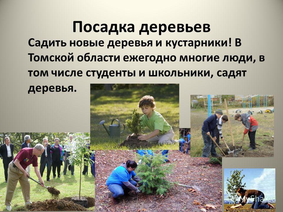 Посадка деревьев Садить новые деревья и кустарники! В Томской области ежегодно многие люди, в том числе студенты и школьники, садят деревья.