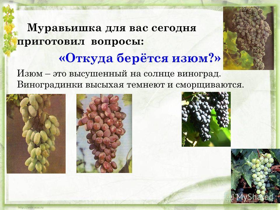 Что интересного вы увидели на этом рисунке? На что похожи семена? Шоколадные деревья по-другому называют – деревья-какао. Семена какао высушивают, при этом они темнеют, затем семена измельчают в порошок. Из этого порошка делают шоколад, но чтобы он п