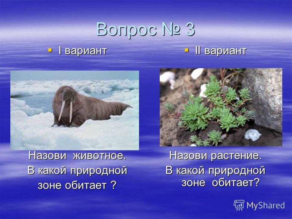 Вопрос 3 I вариант I вариант Назови животное. В какой природной зоне обитает ? II вариант II вариант Назови растение. В какой природной зоне обитает?