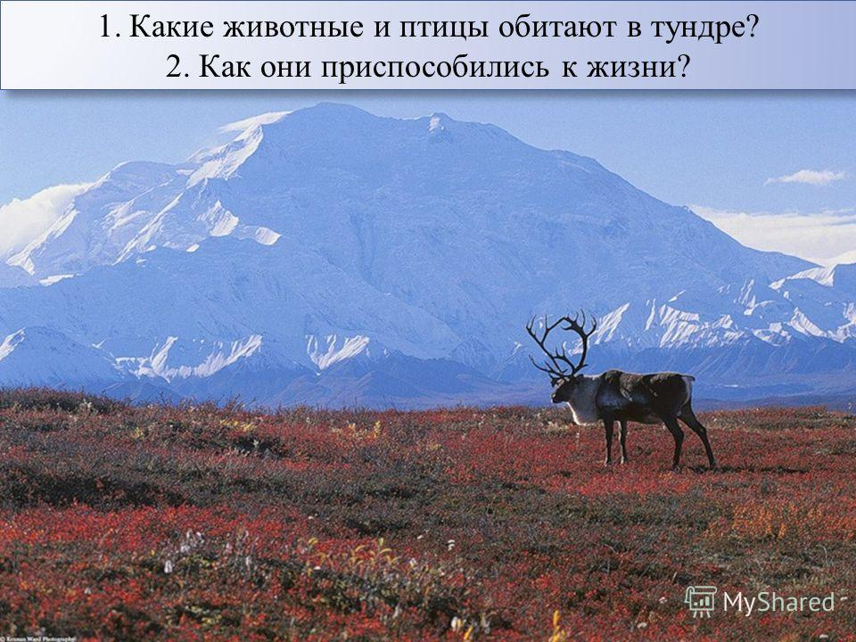 1. Какие животные и птицы обитают в тундре? 2. Как они приспособились к жизни? 1. Какие животные и птицы обитают в тундре? 2. Как они приспособились к жизни?
