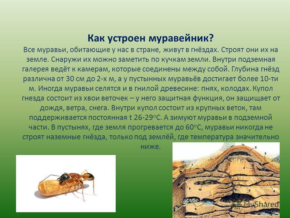 Как устроен муравейник? Все муравьи, обитающие у нас в стране, живут в гнёздах. Строят они их на земле. Снаружи их можно заметить по кучкам земли. Внутри подземная галерея ведёт к камерам, которые соединены между собой. Глубина гнёзд различна от 30 с