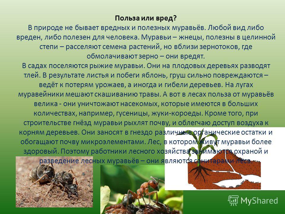Польза или вред? В природе не бывает вредных и полезных муравьёв. Любой вид либо вреден, либо полезен для человека. Муравьи – жнецы, полезны в целинной степи – расселяют семена растений, но вблизи зернотоков, где обмолачивают зерно – они вредят. В са