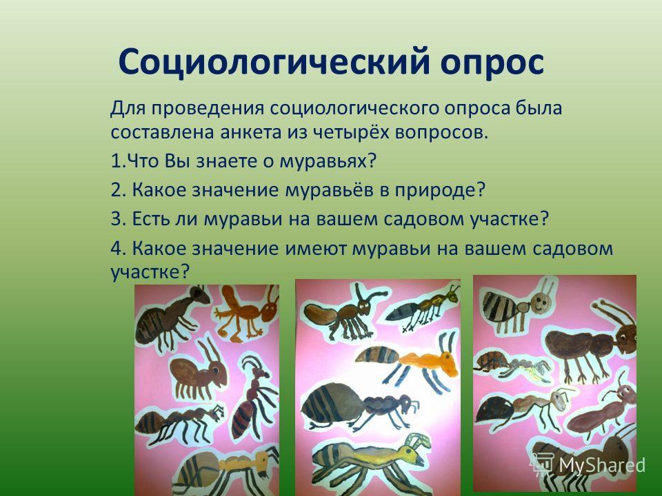 Социологический опрос Для проведения социологического опроса была составлена анкета из четырёх вопросов. 1. Что Вы знаете о муравьях? 2. Какое значение муравьёв в природе? 3. Есть ли муравьи на вашем садовом участке? 4. Какое значение имеют муравьи н