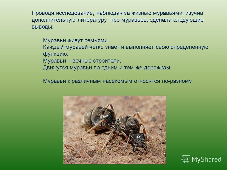 Проводя исследование, наблюдая за жизнью муравьями, изучив дополнительную литературу про муравьев, сделала следующие выводы: Муравьи живут семьями. Каждый муравей четко знает и выполняет свою определенную функцию. Муравьи – вечные строители. Движутся