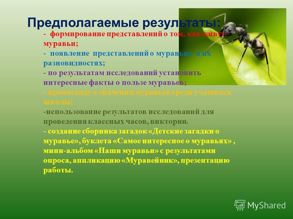 Предполагаемые результаты: - формирование представлений о том, как живут муравьи; - появление представлений о муравьях и их разновидностях; - по результатам исследований установить интересные факты о пользе муравьев; - пропаганду о значении муравьев