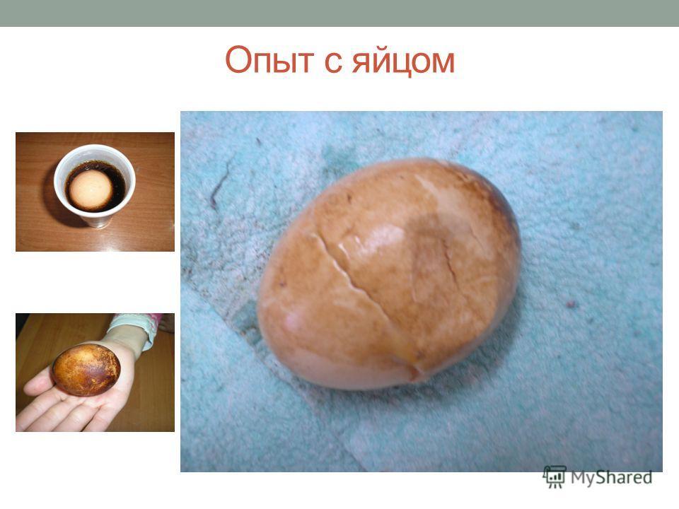 Опыт с яйцом
