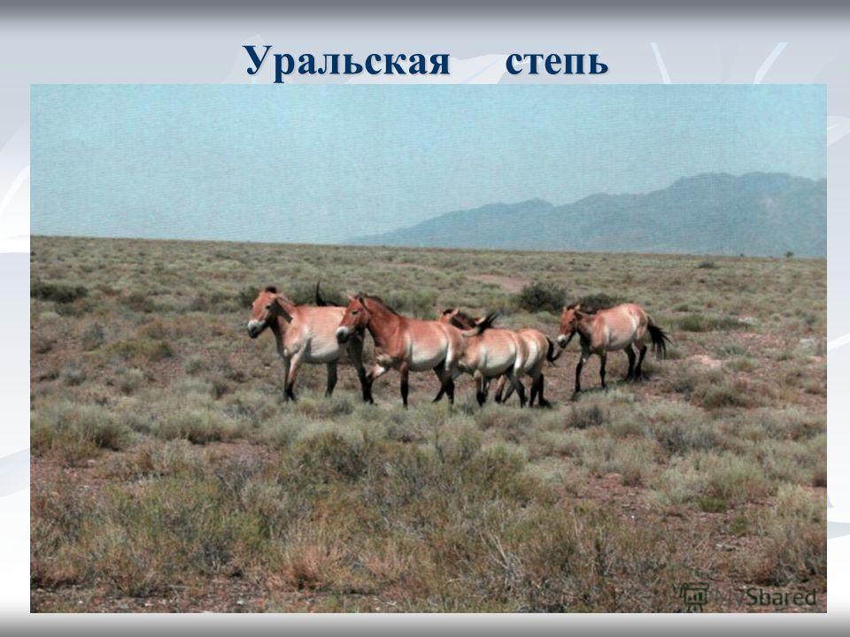 Уральская степь