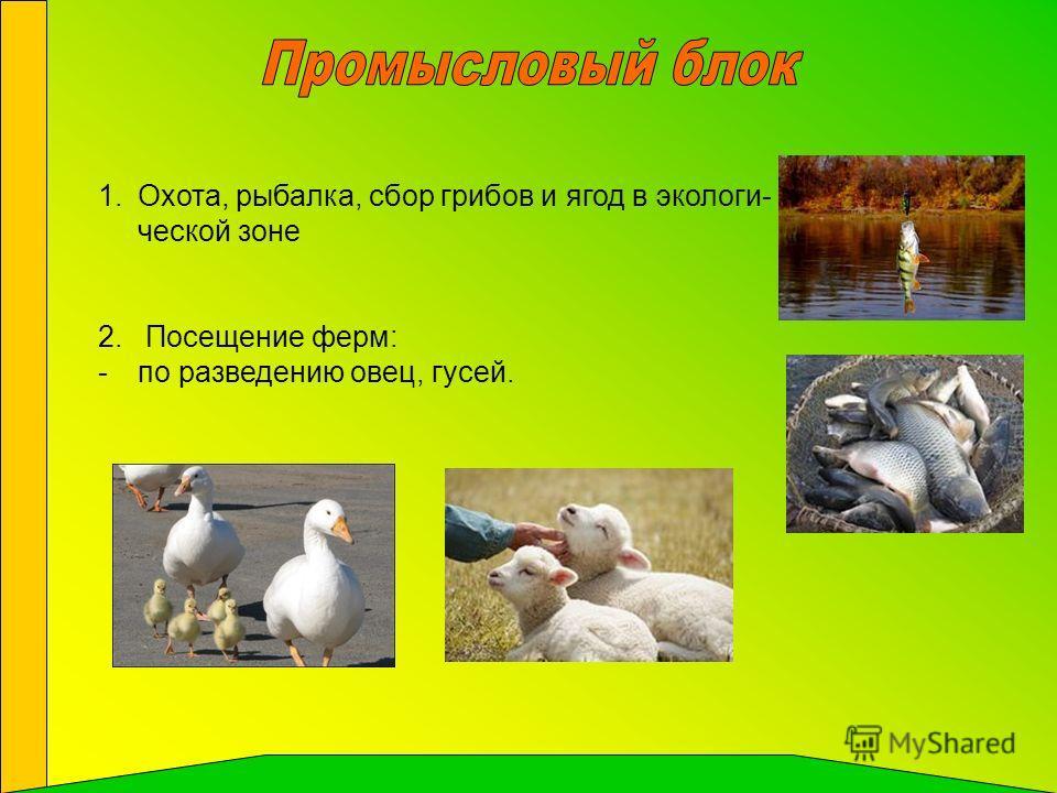 1.Охота, рыбалка, сбор грибов и ягод в экологи- ческой зоне 2. Посещение ферм: -по разведению овец, гусей.