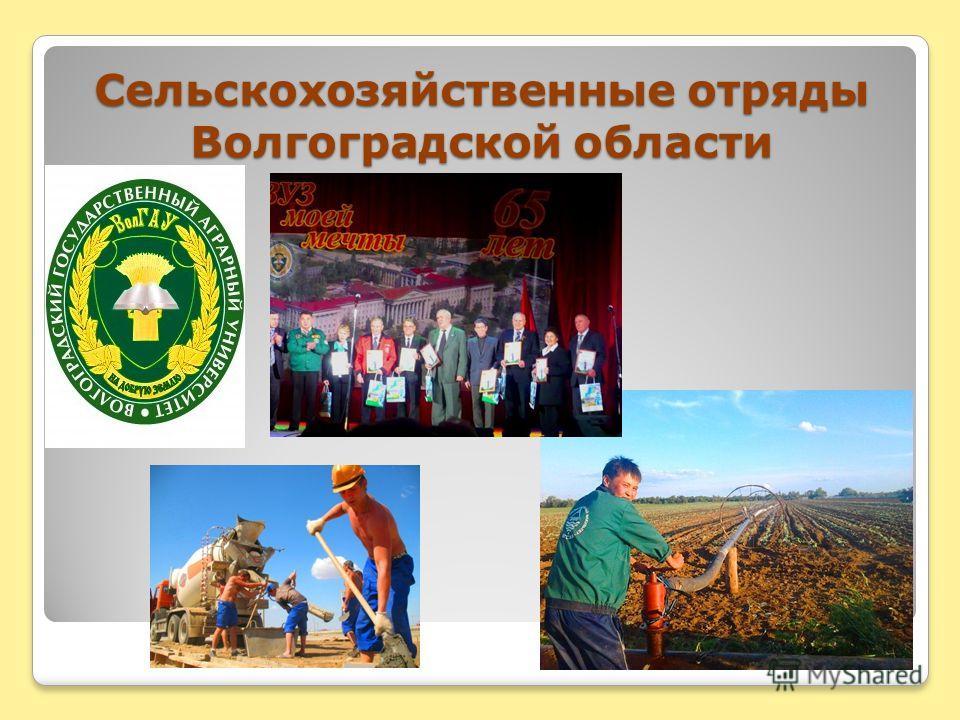 Сельскохозяйственные отряды Волгоградской области