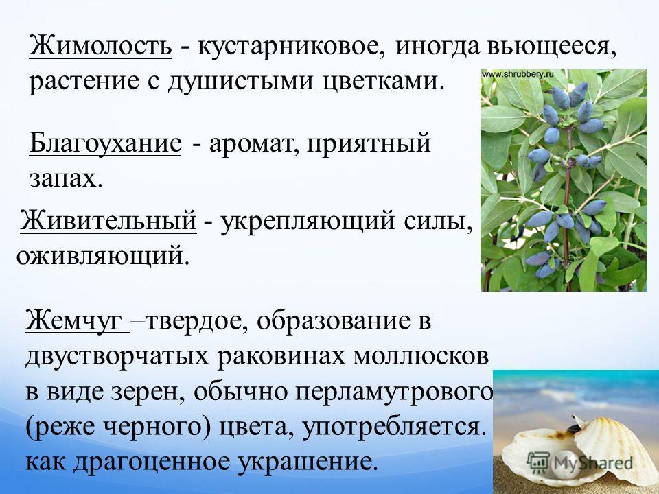 Жимолость - кустарниковое, иногда вьющееся, растение с душистыми цветками. Благоухание - аромат, приятный запах. Живительный - укрепляющий силы, оживляющий. Жемчуг –твердое, образование в двустворчатых раковинах моллюсков в виде зерен, обычно перламу