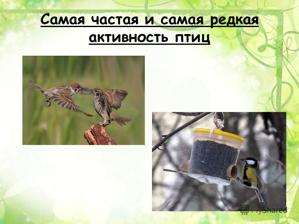 Самая частая и самая редкая активность птиц