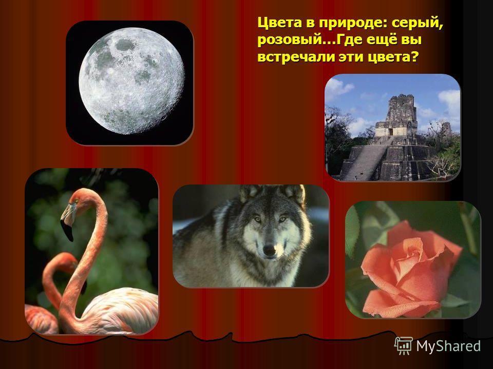 Цвета в природе: серый, розовый…Где ещё вы встречали эти цвета?