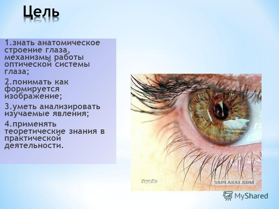 1. знать анатомическое строение глаза, механизмы работы оптической системы глаза; 2. понимать как формируется изображение; 3. уметь анализировать изучаемые явления; 4. применять теоретические знания в практической деятельности.