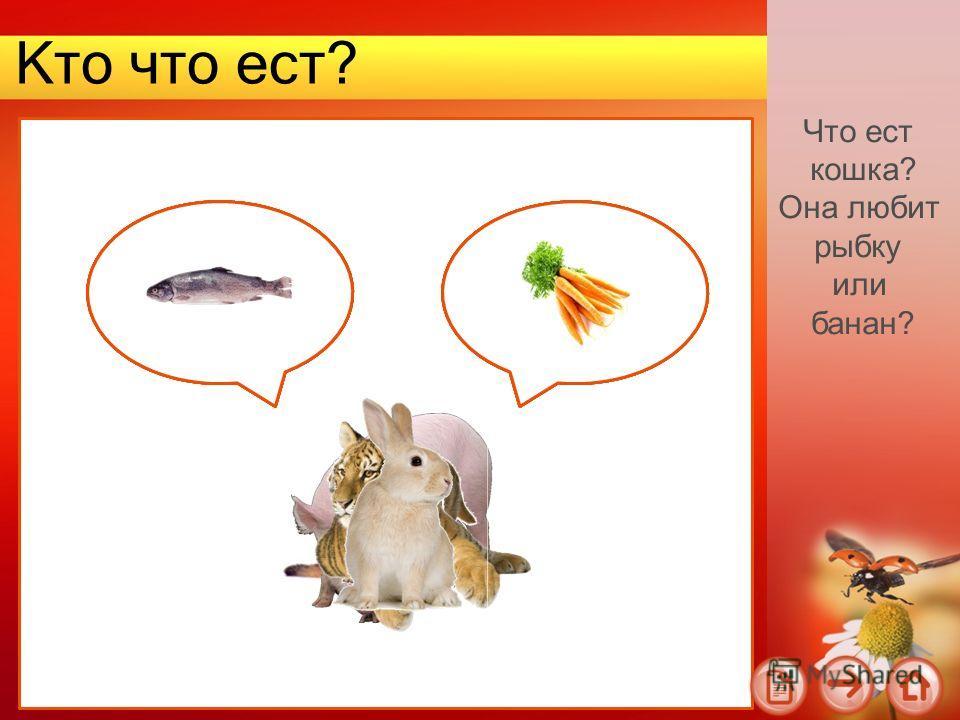 Кто что ест? Что ест кошка? Она любит рыбку или банан?