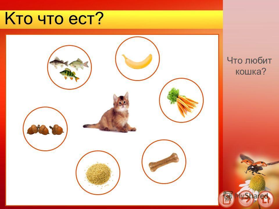 Кто что ест? Что любит кошка?
